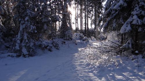 Krásy zimy